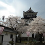 模擬天守と桜
