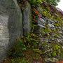本丸石垣(具足蔵付近より)