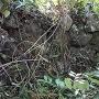 石積みで補強された小径