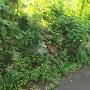 準藩士屋敷跡の石垣