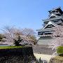 熊本城と桜(2015年)[提供:キロクマ!]