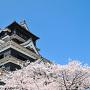 熊本城の桜[提供:キロクマ!]
