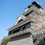 桜越しに熊本城を斜めの角度から[提供:キロクマ!]