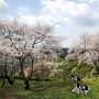 桜咲く田原坂公園[提供:キロクマ!]