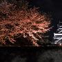 夜の熊本城[提供:キロクマ!]