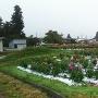 川西ダリヤ園周辺で栽培しているダリヤ