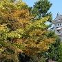 大垣公園からの天守の眺め