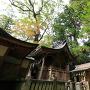 蛭子神社の社殿と巨木