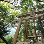 巨木と蛭子神社の鳥居を広角で