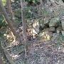 二の郭下の石垣