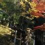 不二滝の紅葉