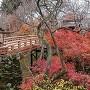 桜雲橋と紅葉