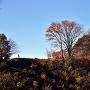 登城道から見る真田本城