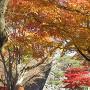 天守台と紅葉
