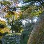 色づく石垣