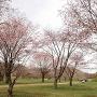 桜の城址[提供:白老町教育委員会]