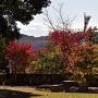 武田神社 紅葉と富士山