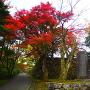 紅葉と城址碑