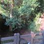 空堀(大手門前から西方向)