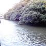 水堀(西側)