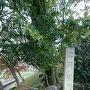 黒野城跡の碑