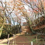 石垣と紅葉その3