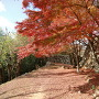 石垣と紅葉その8