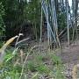 竹藪の中に土塁