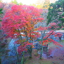 紅葉◆太鼓櫓・新櫓