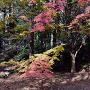 紅葉の本丸跡