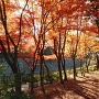 紅葉と外堀石垣