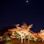 月とお城と紅葉