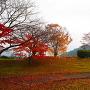 土塁②◆名神道多賀SA