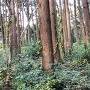 中野久尾(南西側)