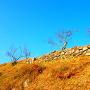 本丸石垣◆横側