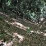 すり鉢状な竪堀