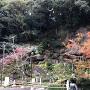 庭園(宝満寺跡)