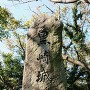 デカイ石碑