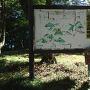佐和山史跡略図