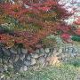 紅葉と残る石垣