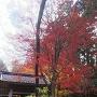 鐘楼と紅葉と(2017初冬)