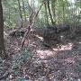 杉の木の井戸