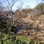 大倉山公園梅林から龍松院をみる