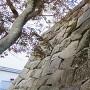 石垣の存在感