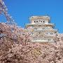 春の姫路城(桜と大天守)