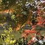 明石城紅葉越しの桜堀と石垣