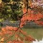 明石城桜堀と石垣