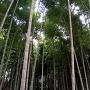 小机城 竹林