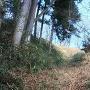 竪堀の下から本丸跡方向を見る