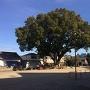 公園の大樹